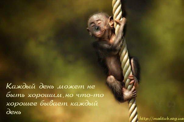 Счастливая обезьяна
