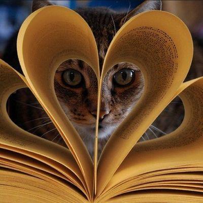 Кот в книге