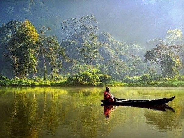 Лодка в джунглях