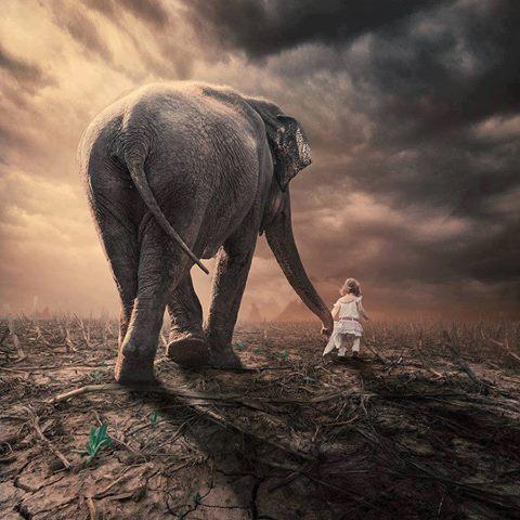 Девочка со слоном