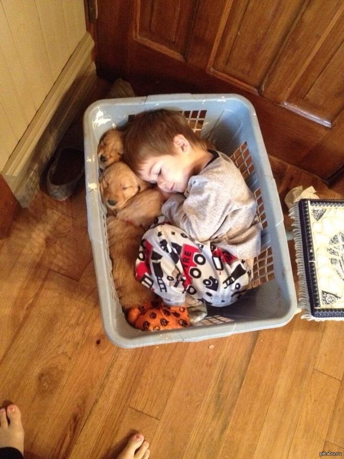 Мальчик и щенята
