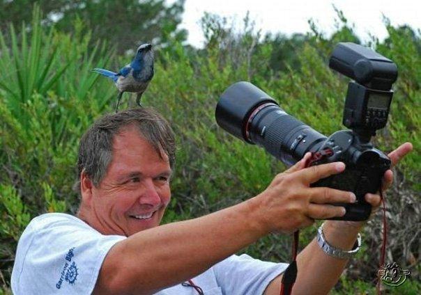 Птичка на голове