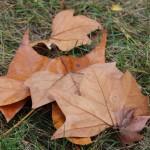 Вот и закончилась осень