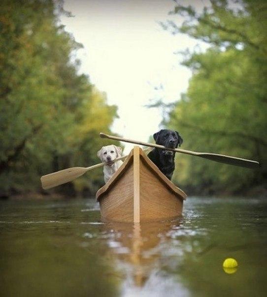 Собаки с вёслами