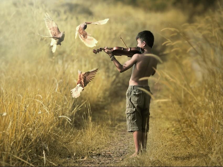 Музыка и птицы