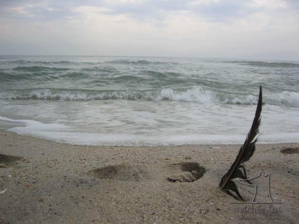 Перо в морском песке