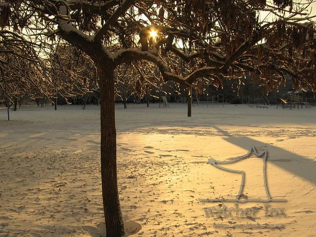 Дерево в солнечном снегу