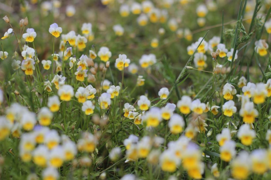 Цветы в Мигее