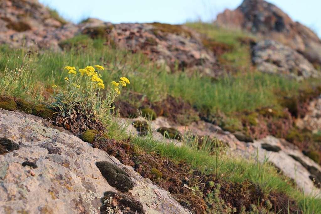 Цветок на скале