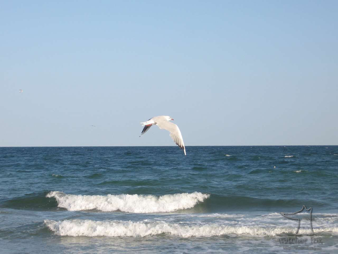Чайка над морем