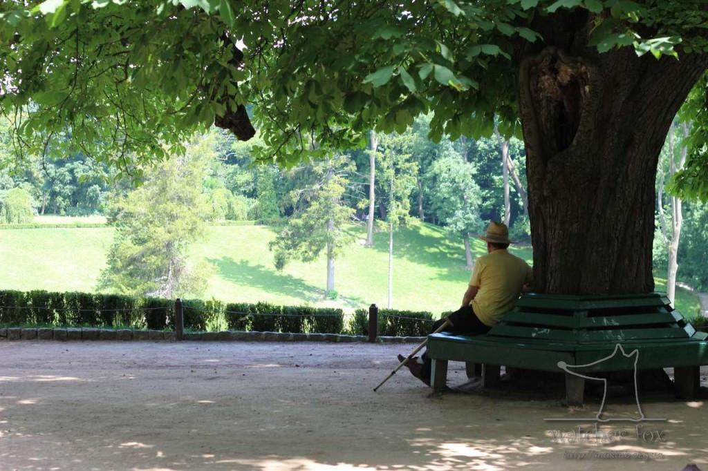 Пожилой мужчина в парке Софиевке