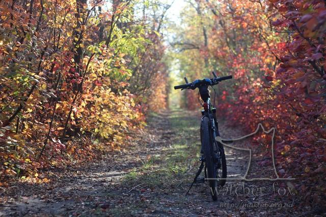 Велосипед в осеннем лесу