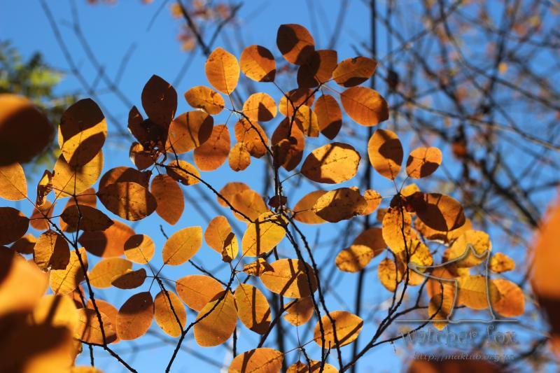 Золотые осенние листья
