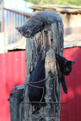 Коты висят на пеньке