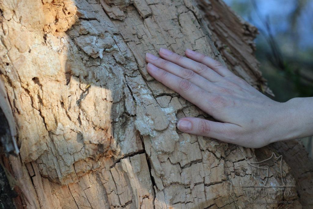 Рука на древесине сухого дерева